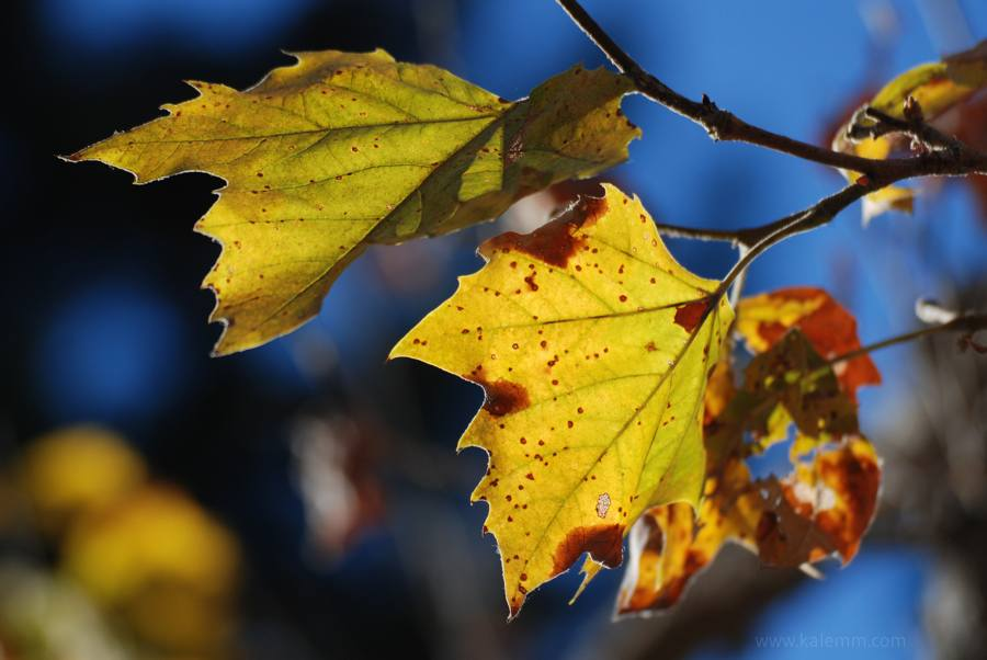 Close-up of colorful leaves in the fall, autumn