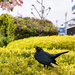 Twitter, bird, San Francisco, Fisherman's Wharf