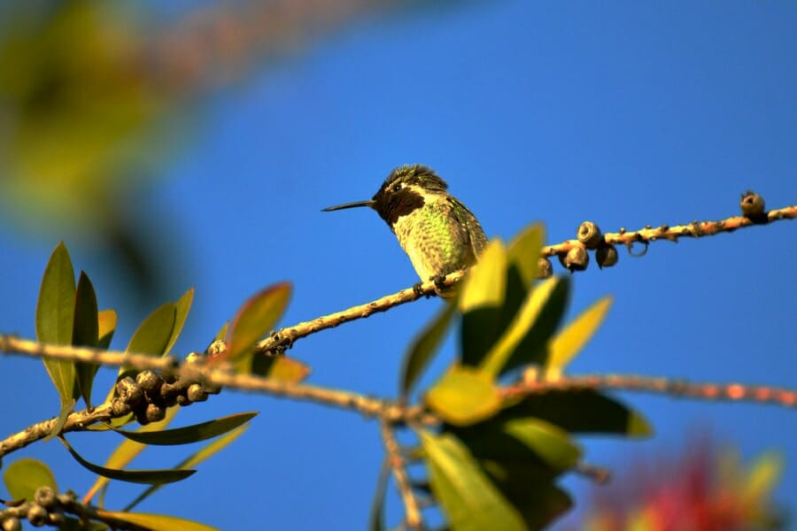 hummingbird sitting in a treee